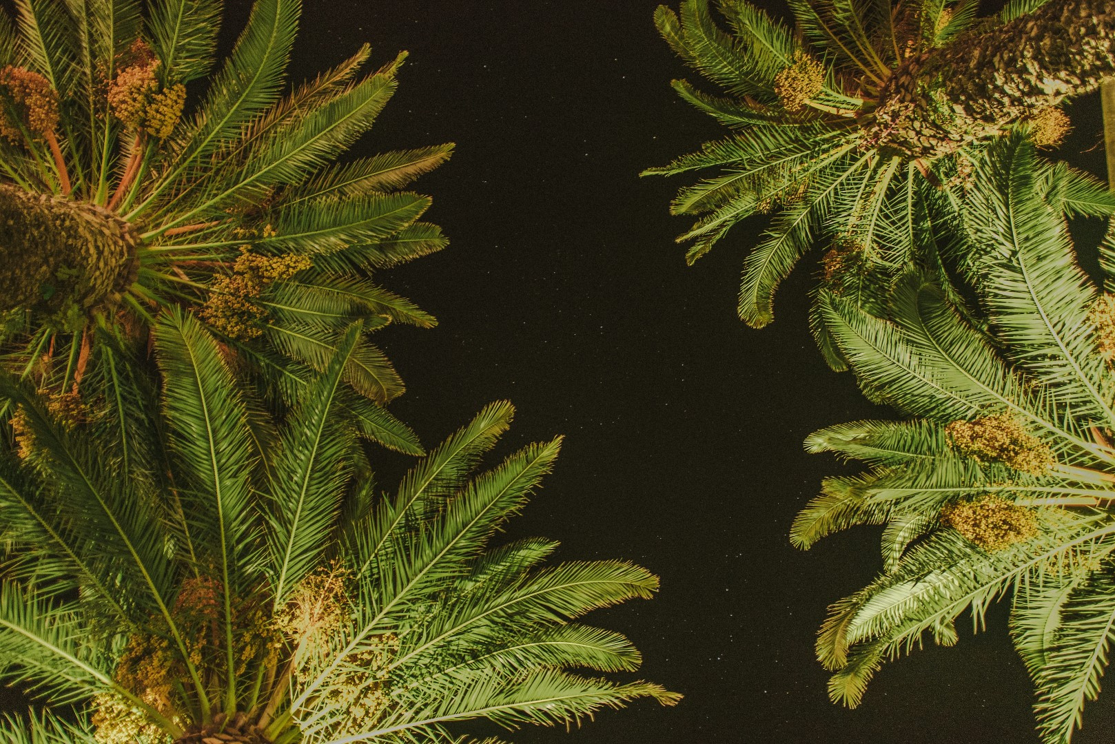 A simple night photo by Marko Marinkovic, there are edges of palms trees and a starry sky.